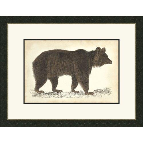 Bear ll Framed Graphic Art