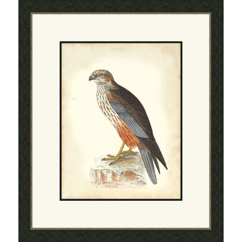 Melissa Van Hise Hawks ll Framed Graphic Art