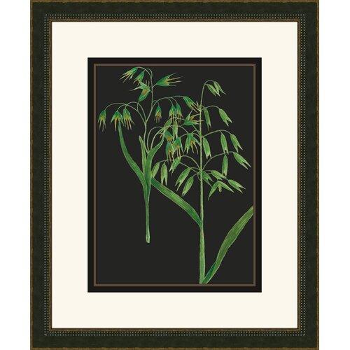 Weinmann III Framed Graphic Art on Black