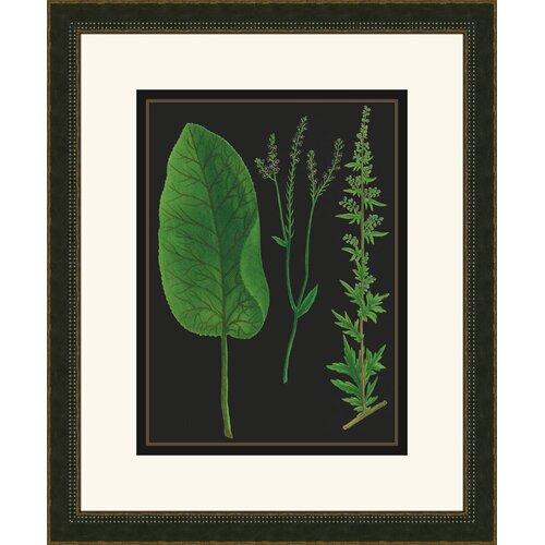 Weinmann IV Framed Graphic Art on Black