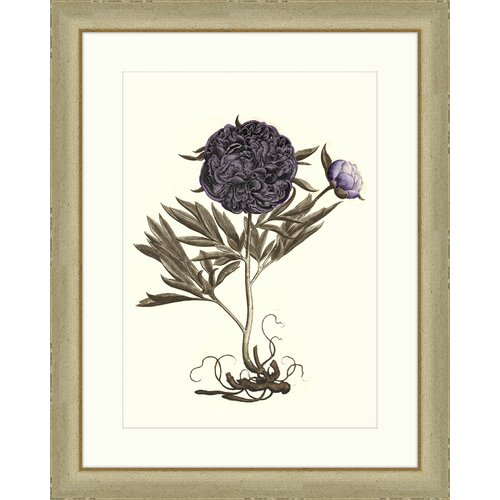 Buchoz Flowers II Framed Graphic Art