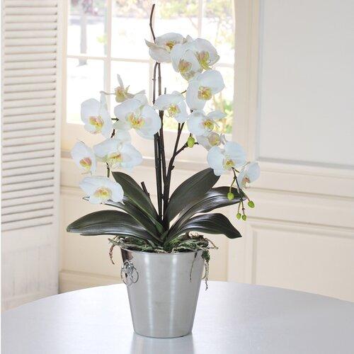 Jane Seymour Botanicals Orchid Phalaenopsis in Vase