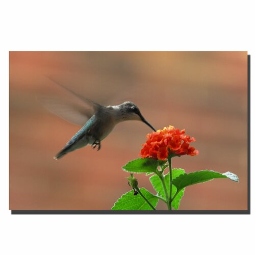 Trademark Fine Art 'Hummingbird on a Lantana' by Kurt Shaffer Photographic Print on Canvas