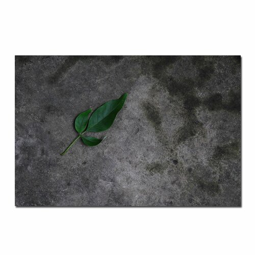 Trademark Fine Art 'Just a Leaf on a Rock' by Kurt Shaffer Photographic Print on Canvas