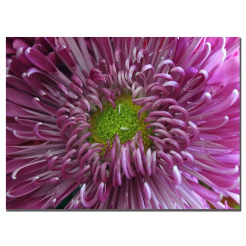 Trademark Fine Art 'Pink Flower' by Patty Tuggle Photographic Print on Canvas