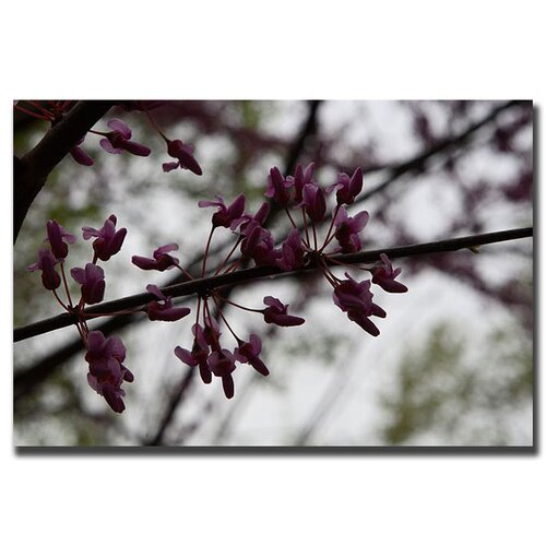 Purple Bloom by Cary Hahn Photographic Print on Canvas