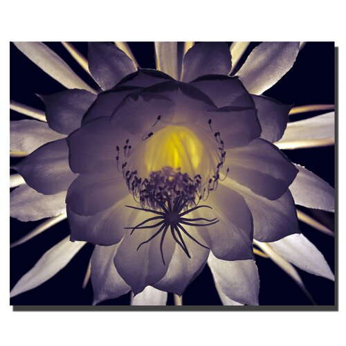 "Trademark Fine Art ""Floral Contrast"" by Kurt Shaffer Photographic Print on Canvas"
