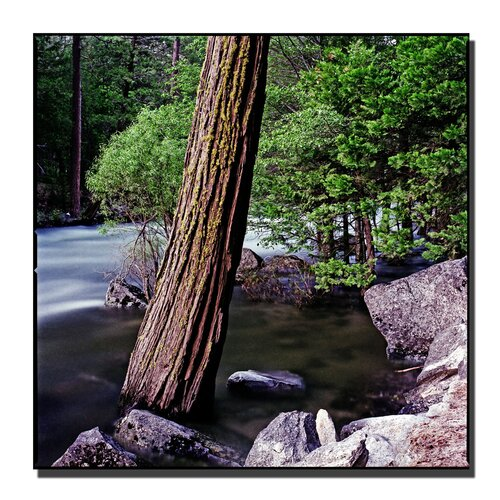 'Yosemite I' by Preston Photographic Print on Canvas