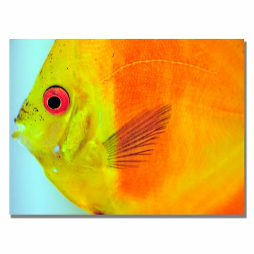'Tropical Fish Close-up' by Kurt Shaffer Photographic Print on Canvas