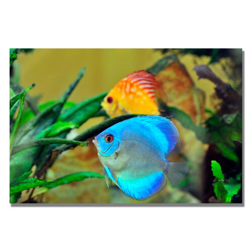 'Two Tropical Fish II' by Kurt Shaffer Photographic Print on Canvas