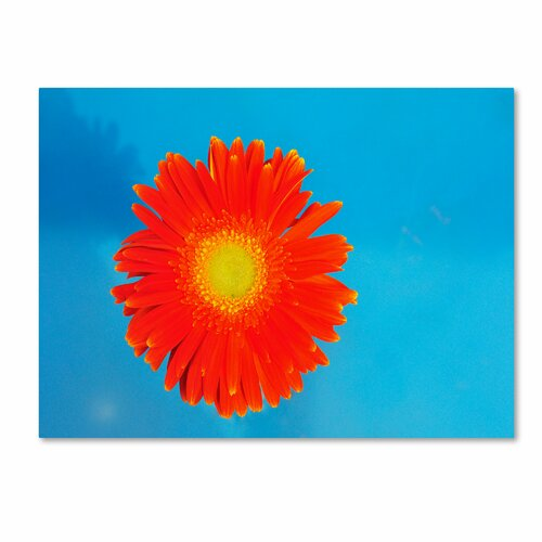 Trademark Fine Art 'Orange and Blue' by Kurt Shaffer Photographic Print on Canvas