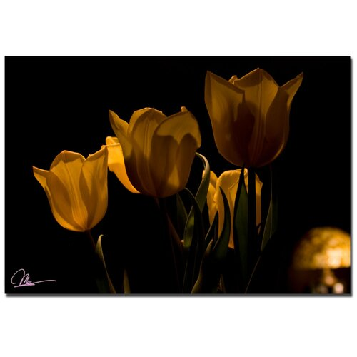 'Bouquet of Tulips' by Martha Guerra Photographic Print on Canvas