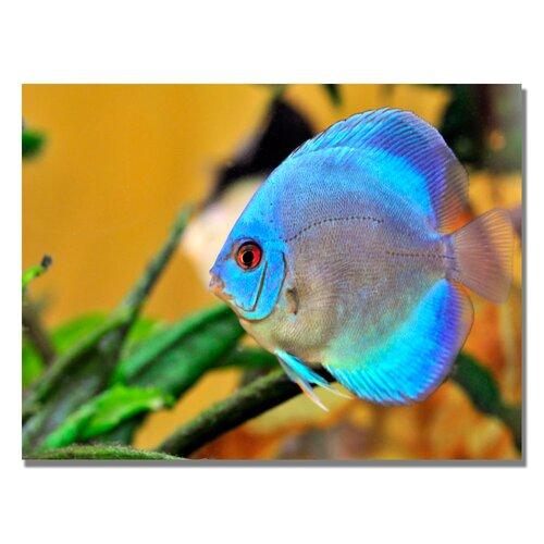 Trademark Fine Art 'One Blue Fish' by Kurt Shaffer Photographic Print on Canvas
