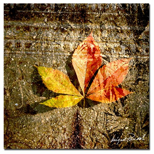 Trademark Fine Art 'Red Leaves II' by Miguel Paredes Photographic Print on Canvas