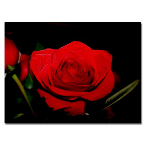"Trademark Fine Art ""Red Velvet"" by Patty Tuggle Photographic Print on Canvas"