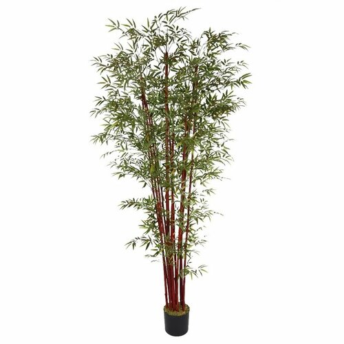 Harvest Bamboo Tree in Pot