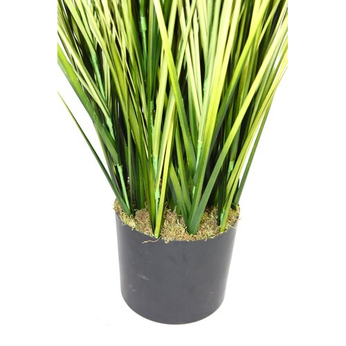 Laura Ashley Home Onion Grass in Cylinder Pot