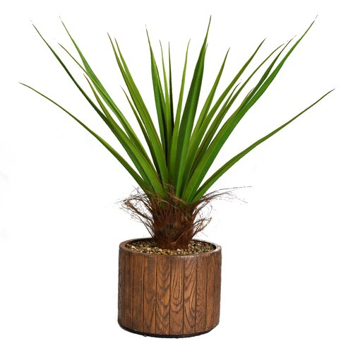 Tall Agave Floor Plant in Cylinder Fiberstone Pot