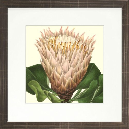 Floral Living Tropical Vision XI Framed Graphic Art
