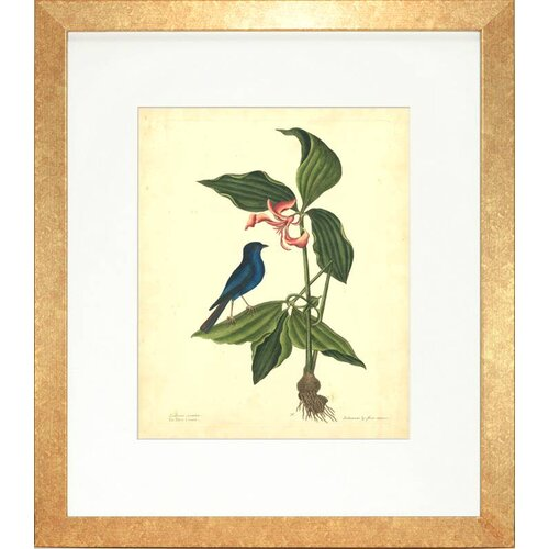 Indigo Avenue Floral Living Catesby Bird and Botanical IV Framed Graphic Art