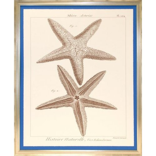 Indigo Avenue Seaside Living Striking Starfish I Framed Graphic Art