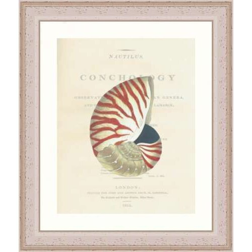 Indigo Avenue Seaside Living Conchology Nautilus Whitewashed Framed Graphic Art
