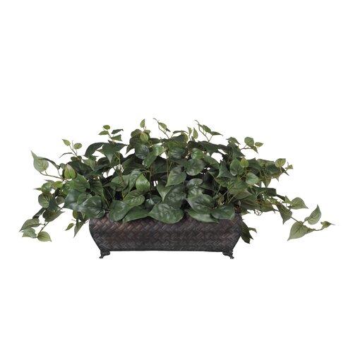 Nearly Natural Pothos Ledge Desk Top Plant & Reviews