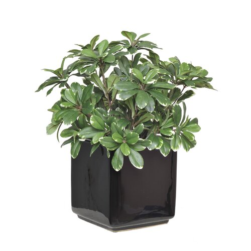 House of Silk Flowers Artificial Mini Variegated