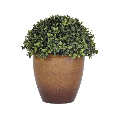House of Silk Flowers Inc. Half Ball Topiary in Brown Ceramic