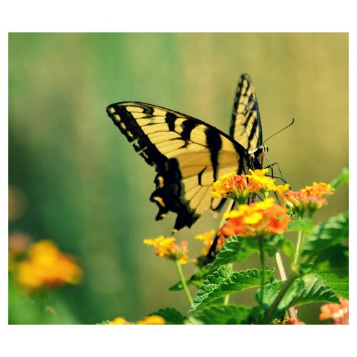 'Love Is Like a Butterfly' by Robin Dickinson Photographic Print on Canvas