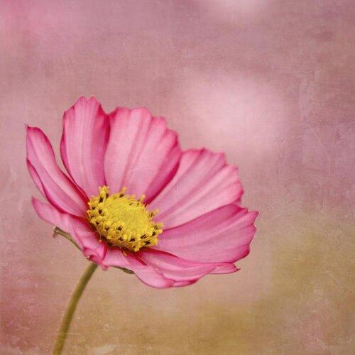 'Blossom' by Iris Lehnhardt Photographic Print on Canvas