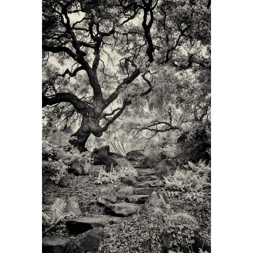 'Twelve Step Program' by Geoffrey Ansel Agrons Photographic Print on Canvas
