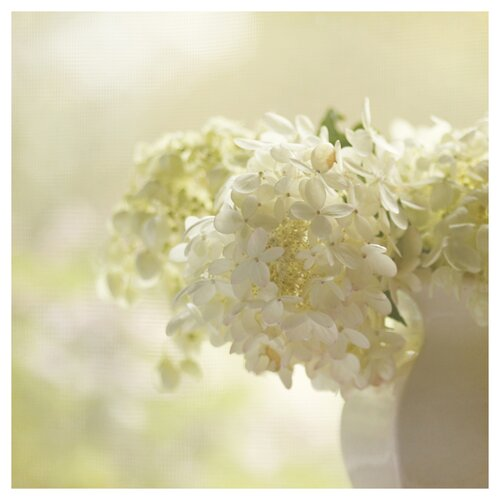 'White Hydrangea' by Silvia Cook Photographic Print on Canvas