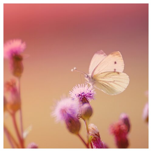 'Pink Butterfly' by Monika Strigel Photographic Print on Canvas