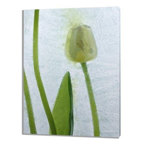 Flores Congeladas Graphic Art on Canvas