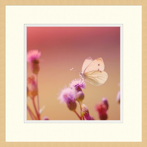 'Pink Butterfly' by Monika Strigel Framed Photographic Print