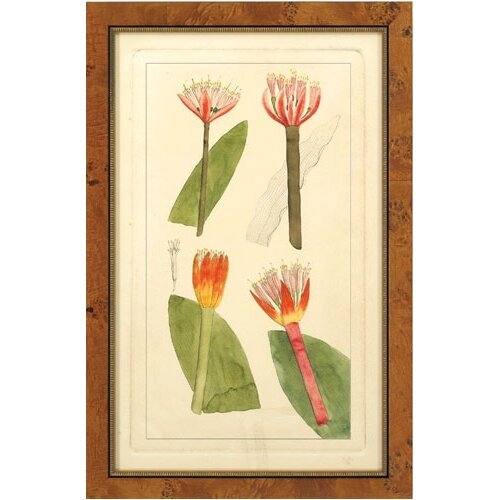 Epic Art Rachel's Tropicals II Framed Graphic Art