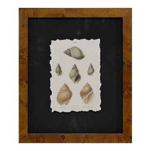 Epic Art Cawley's Shells I Framed Photographic Prints