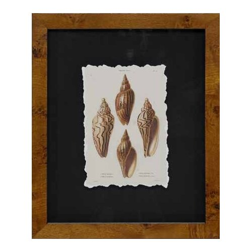Epic Art Cawley's Shells III Framed Photographic Prints