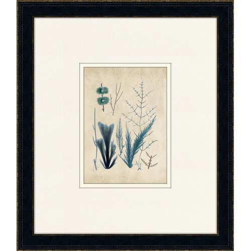 Fitch Sealife I Framed Graphic Art