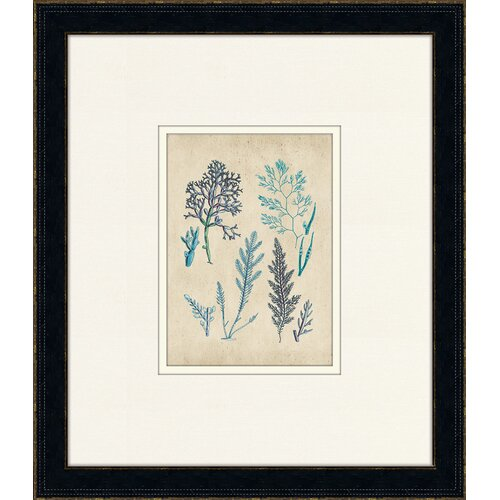 Fitch Sealife V Framed Graphic Art