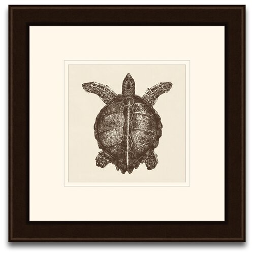 Turtle Framed Graphic Art