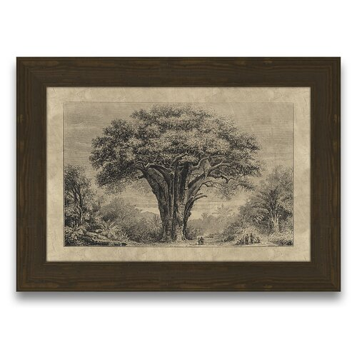 Epic Art Timeless Timber Baobab Tree Framed Graphic Art