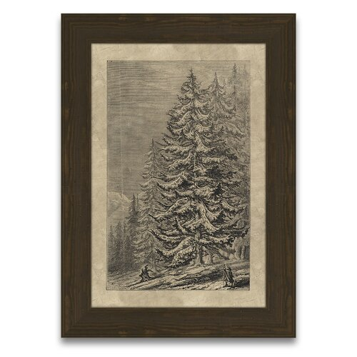 Epic Art Timeless Timber Spruce Fir Framed Graphic Art