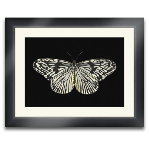 Beauté Ailé Lloyd Butterfly II Framed Photographic Prints