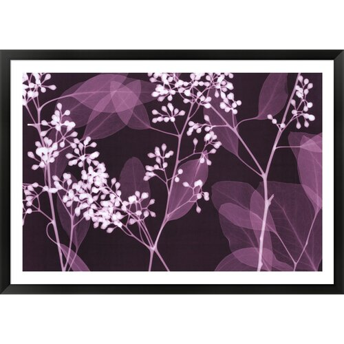 Eucalyptus Branches by Steven N. Meyers Framed Photographic Print