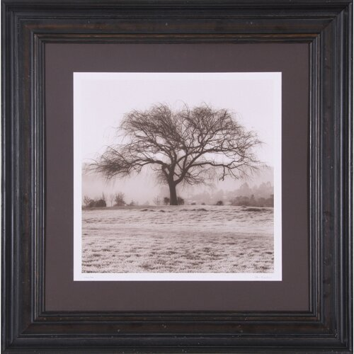 Willow Tree Framed Photographic Print