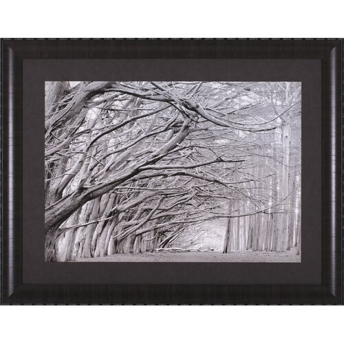 Art Effects Crystal Grove by Chris Honeysett Framed Photographic Print