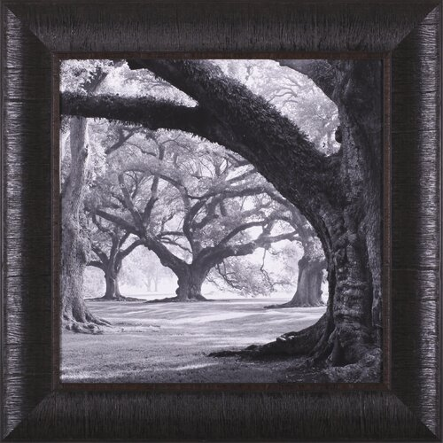 Oak Alley, West Row by William Guion Framed Photographic Print
