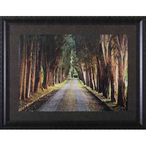 Tree Tunnel by Michael Cahill Framed Photographic Print